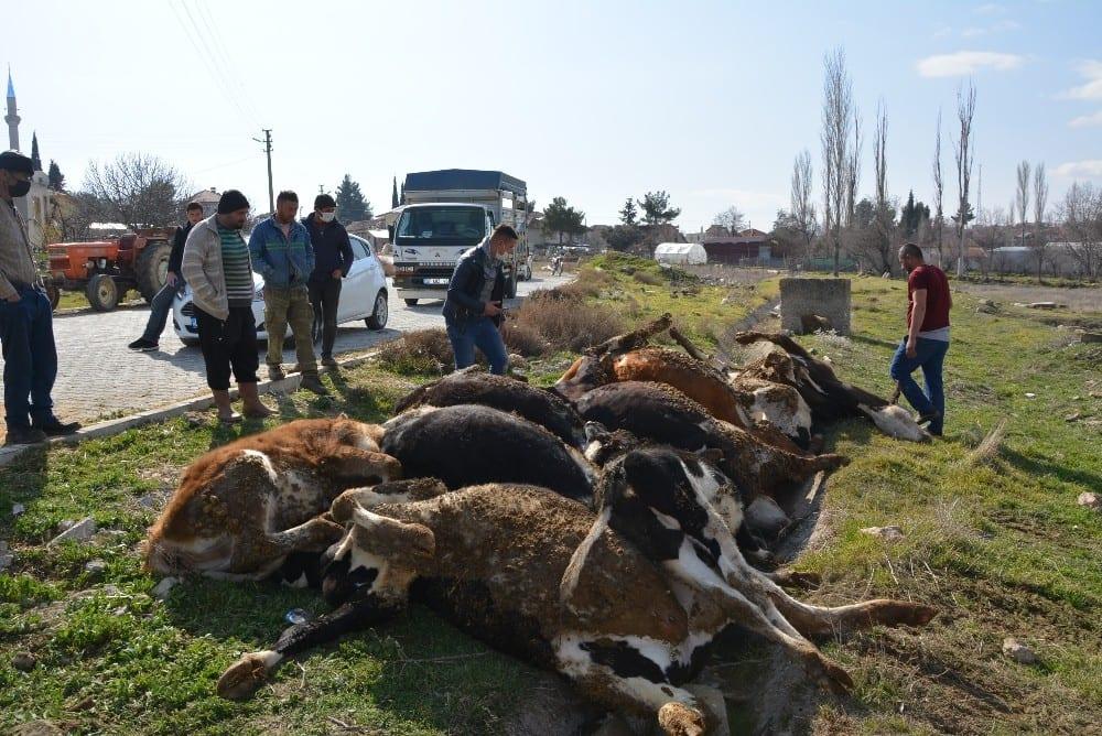 9 buyukbas hayvani telef olan vatandasa buyuksehirden 3 gebe inek 1 LEvABJEl