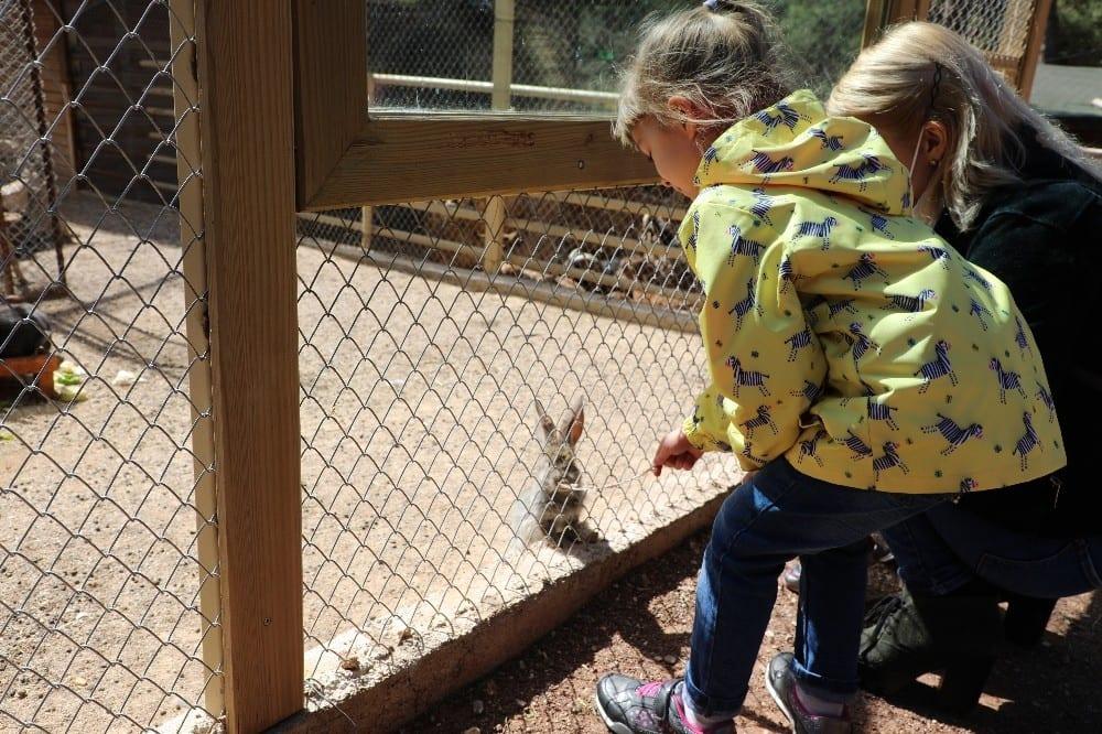 antalya hayvanat bahcesinde yeni yavrular 6 n7KUh7Ak