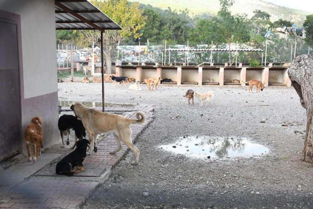kemerde bir ayda 27 sokak hayvani sahiplendirildi 4 q2IWubK7