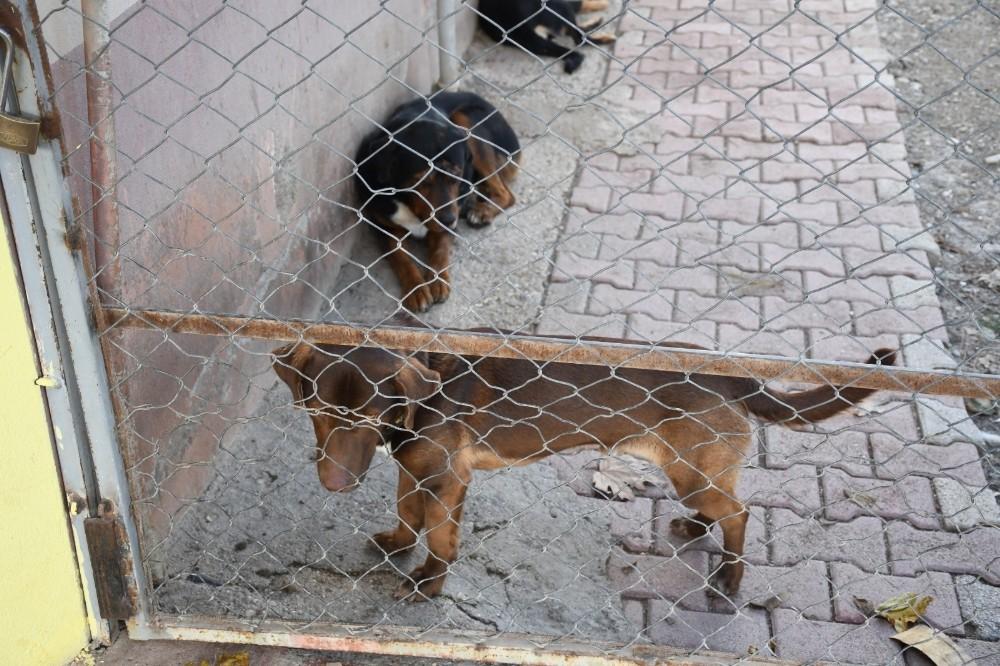 kemerde bir ayda 27 sokak hayvani sahiplendirildi 5 sDbtM5tQ