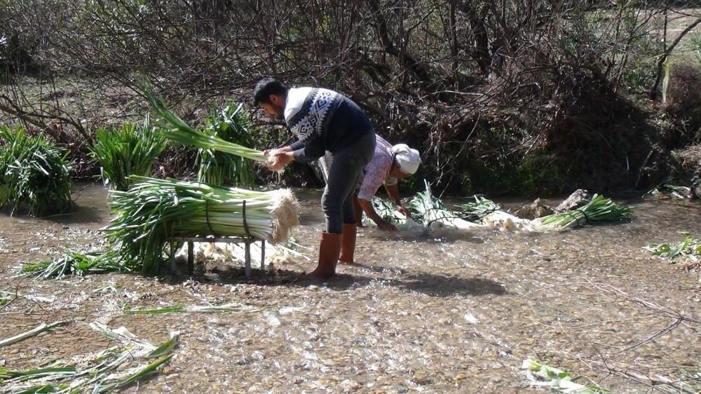 turkiyenin kislik sebze uretim merkezlerinden antalyada pirasa hasadi yogun sekilde devam ediyor 2 scQuBJSB