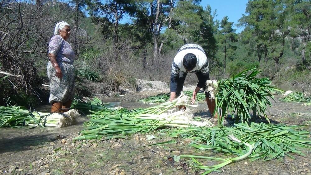 turkiyenin kislik sebze uretim merkezlerinden antalyada pirasa hasadi yogun sekilde devam ediyor 3 A4N4rXUD